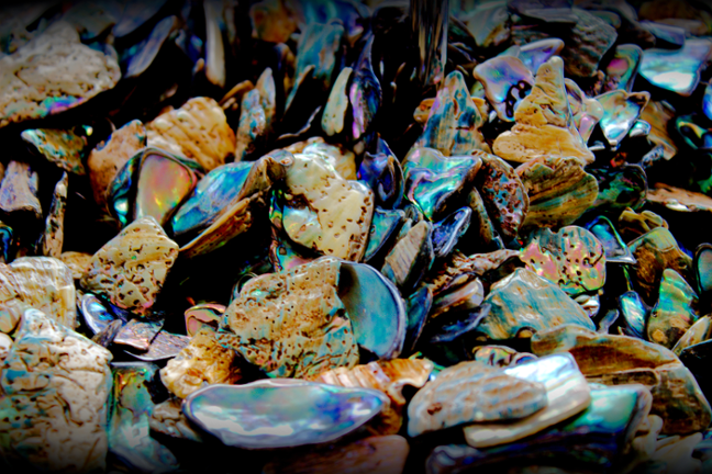 Paua Shell Pieces