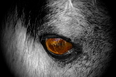 Reflection Horse Eye